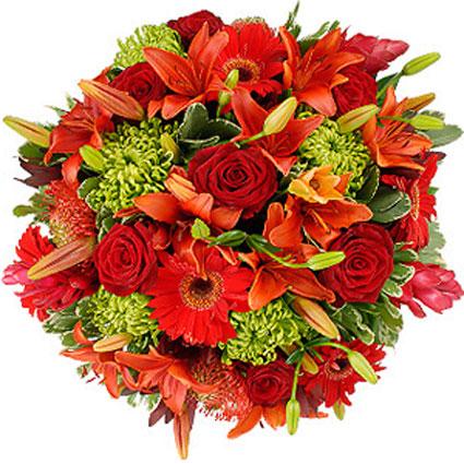 Цветы: Разноцветное лето