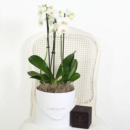 Dāvanu komplekts: Orhideja ziedu kārbā un aromātiska svece