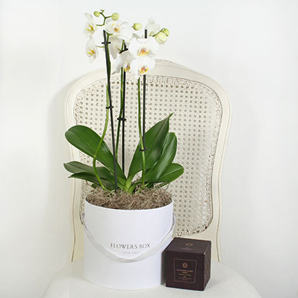 Flower Delivery - Gift Set: Orchid In A Flower Box And Fragranced Candle