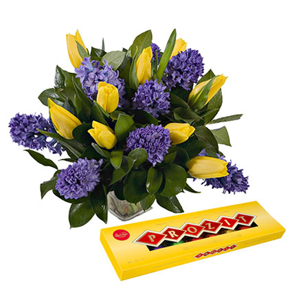 Lovely combination of gloriously scented blue hyacinths and golden cups of the yellow tulips