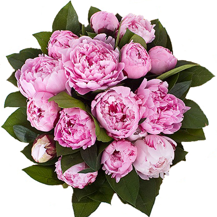 Ziedu veikals. Pušķis no 15 rozā peonijām un dekoratīviem zaļumiem.  Ziedu klāsts ir ļoti plašs. Var gadīties, ka