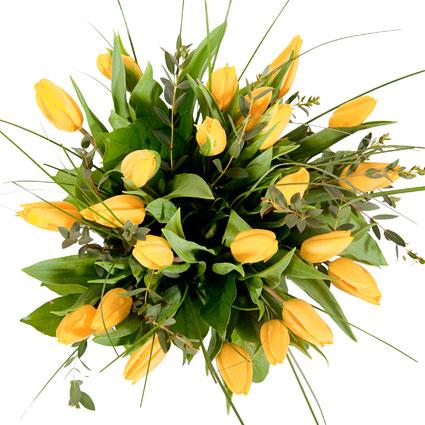 Ziedu piegāde Rīgā. Pušķis no 23 saulaini dzeltenām tulpēm ar dekoratīviem zaļumiem.  Ziedu klāsts ir ļoti plašs. Var