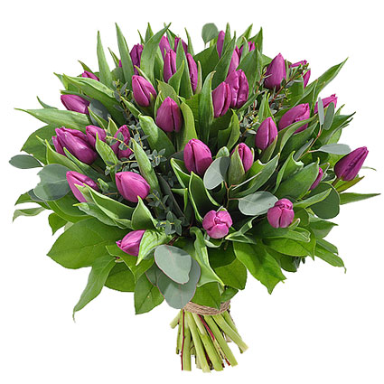 Ziedu piegāde Rīgā. Apjomīgā ziedu pušķī 31 violeta tulpe ar atsvaidzinošiem eikalipta zaļumu akcentiem.  Ziedu klāsts ir