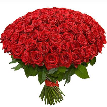 Ziedi Latvijā. Neaizmirstams, iespaidīgs liesmojoši sarkanu rožu pušķis. Pušķī 101 sarkana 60 cm gara roze.   Ziedu klāsts