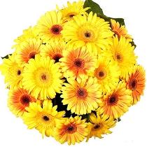 Жёлтые герберы в букете: Янтарь