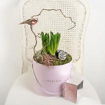 Kompozīcija ziedu kārbā un smaržas HUGO BOSS Femme EDP 75 ml
