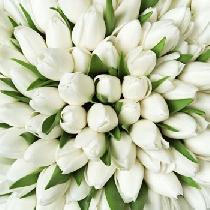 Ziedi: Baltas tulpes. Izveido savu tulpju pušķi!