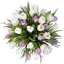 Baltu un violetu tulpju pušķis