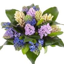 Dažādu krāsu hiacinšu pušķis