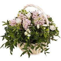 Ziedu kompozīcija grozā : Viss smaržo...