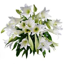 Lilijas izskatās karaliski un smaržo dievīgi!