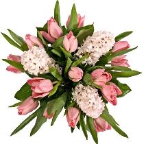 Ziedi: Rozā tulpes un hiacintes