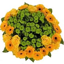 Ziedi: Krāsu svētki