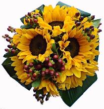 Ziedi: Saulespuķu dziesma. Ziedu piegāde Rīgā