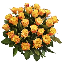 Ziedi: Zvaigžņu zelts