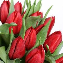 Ziedi: Sarkanas tulpes. Izveido savu tulpju pušķi!