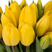 Ziedi: Dzeltenas tulpes. Izveido savu tulpju pušķi!