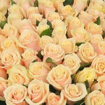 Ziedi: Kremkrāsas rozes. Izveido savu rožu pušķi!