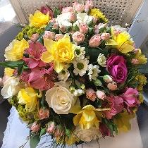 Ziedu pušķis: Saulstari
