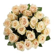 Kremkrāsas rožu pušķis