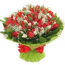 Sarkanas un baltas tulpes smalkziedu mežģīnēs