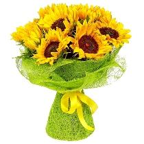Ziedi: Saules apskāvienos