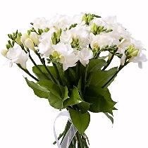 Ziedi: Frēziju burvība. Piegāde Rīgā