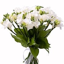 Ziedi: Frēziju burvība