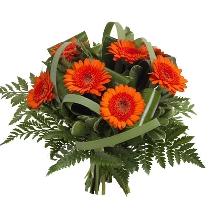 Ziedi: Rudā dēkaine. Piegāde Rīgā un Latvijā