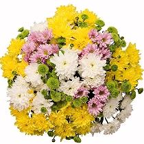 Ziedi: Dzīvesprieks