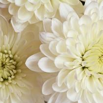 Ziedi: Baltas krizantēmas. Izveido savu pušķi!