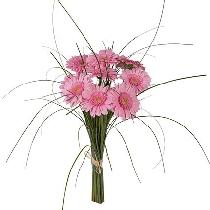 Ziedi: Rozā  rītausma