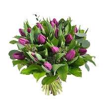 Violetu tulpju pušķis