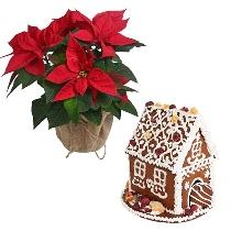 Sezonas ziedu dāvana: Puansetija un piparkūku mājiņa. Piegāde Rīgā